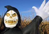 Death in a corn field