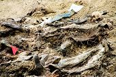 SREBRENICA, BOSNIA, 12 JUNE 1996 - The bodies of dozens of Bosnian Muslim men lie at the bottom of a mass grave outside Srebrenica, Bosnia.