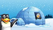 Illustration of the penguins and the igloo