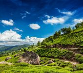 Kerala India travel background - green tea plantations in Munnar, Kerala, India