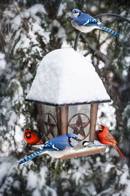 picture of cardinal-bird  - Bird feeder in winter with blue jays and cardinals - JPG