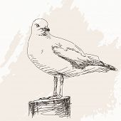 Vector Illustration Sketch of Seagull isolated