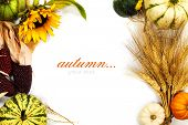 Autumn frame over white. Thanksgiving day, harvesting  or autumn concept (with easy removable sample