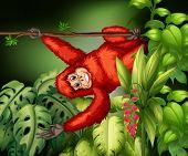 Illustration of an orangutan in a jungle