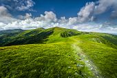 summer landscape. mountain path through the field.
