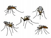 stock photo of gnats  - Set of black biting mosquitoes isolated on white - JPG