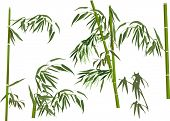 illustration with green bamboo collection isolated on white background