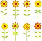 Sunflowers, Autumn Flowers