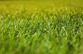 Beautiful green grass texture on golf court