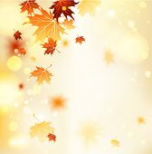 Fall background with maple leaves. Copy space