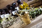 Fresh medicinal herbs on wooden