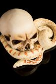 Creepy image of a snake curling around a skull