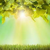 Autumn. Fresh spring green field grass with green bokeh and sunlight backgrounds
