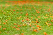 Orange Flowers Fell On The Ground