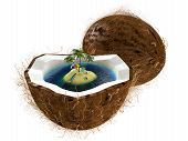 Island In Coconut