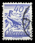 AUSTRIA - CIRCA 1925: stamp printed by Austria, shows White Shouldered Eagle, circa 1925