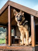 German shepherd on watch in its wooden kennel