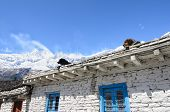 Dogs Resting On The White Stone House Roof In Himalayas