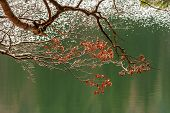 Branches With Foliage On Blurred Background Of Forest Lake