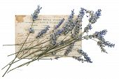 Dried Lavender Flowers And Old Post Card