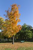 Colorful Orange Tree In The Fall