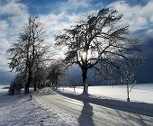 Wintry View With Snow Covered Road Lined By Trees