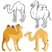 image of hump  - Illustration of isolated bactrian and dromedary camels on white background - JPG