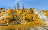 stock photo of walking dead  - Dead trees in Mammoth Hot Springs area of Yellowstone National Park Wyoming - JPG