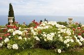 Rose Garden And Sea