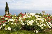 Rose Garden And Sea