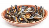 picture of carapace  - Open steamed mussels served in a casserole - JPG