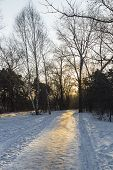 In winter the path in the early morning