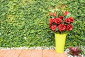 stock photo of climbing roses  - Red rose bouquet on green climbing fig background for valentine day - JPG