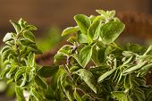 stock photo of oregano  - Raw Green Organic Oregano Ready to Use - JPG
