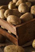 Organic Raw Brown Potatoes
