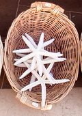 pic of memento  - Sand starfish for sale in a shop - JPG