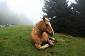 Horse Sitting On Grass In Mist
