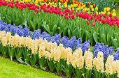 Vibrant flowerbed spring flower park