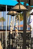 Hanging seashells