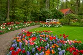 stock photo of stone house  - stone path to hut in the spring flower garden Keukenhof Netherlands - JPG
