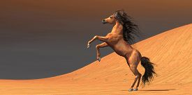 foto of bucking bronco  - A wild Arabian mare rears up in a desert environment full of red sand dunes - JPG