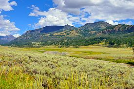 image of lamar  - Lamar Valley in Yellowstone National Park Wyoming in summer - JPG