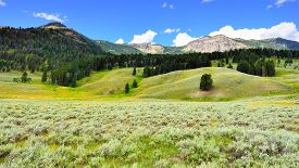 pic of lamar  - Lamar Valley in Yellowstone National Park Wyoming in summer - JPG