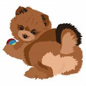 stock photo of pomeranian  - Vector Illustration pomeranian Spitz Puppy - JPG