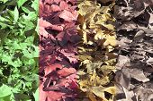 picture of pass-time  - differents colors of leaves to represent the pass of time - JPG
