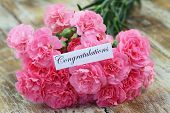 picture of carnation  - Congratulations card with pink carnations on rustic wood - JPG