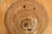 picture of sawing  - Abstract wood background with radial paths and cracks formed after sawing wood
