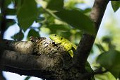 image of lizard skin  - Beautiful lizard sitting on a tree in the wild - JPG