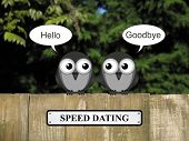 foto of bird fence  - Comical birds speed dating perched on a timber garden fence against a foliage background - JPG