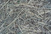 stock photo of dry grass  - dry grass texture podvyadshie grass - JPG
